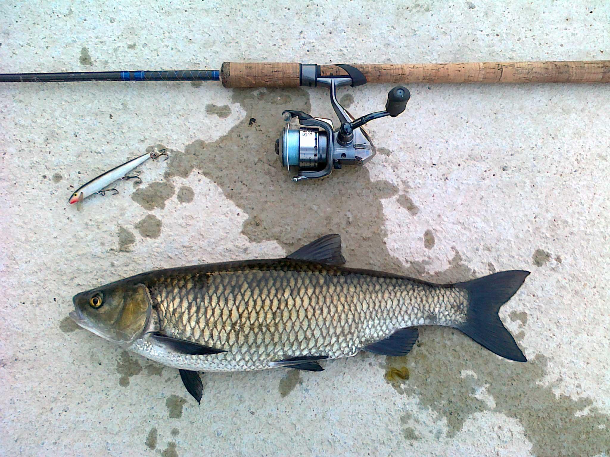 Trabucco tv tecnica di pesca all 39 inglese laghi di for Comprare pesci